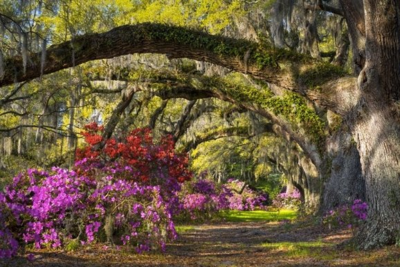 Best Things To Do in Charleston